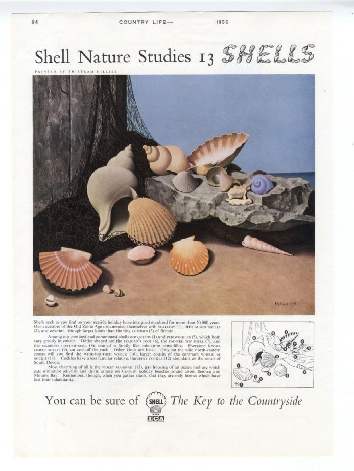 1956 TRISTRAM HILLIER Sea Shells PERIWINKLE Cockle WHELK Scallop VIOLET SNAIL